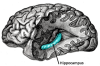 The Science of Learning: Best Approaches for Your Brain